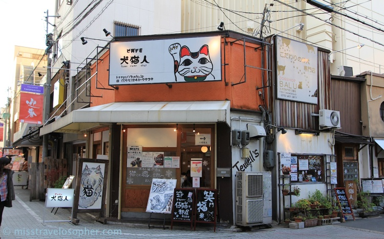 cat cafe kyoto