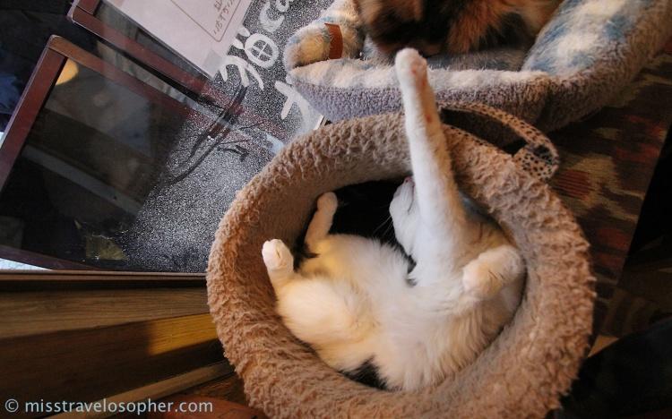 It's a cat's life.. dream away
