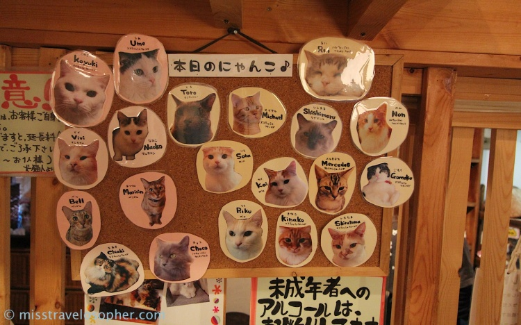 The feline staffs of the cafe