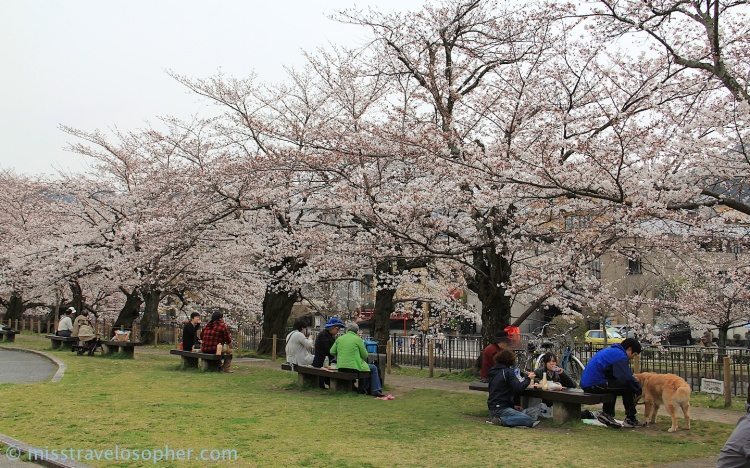 Hanami picnics outside Heian Shrine