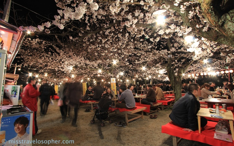 Hanami parties during the cherry blossom viewing season: dining under a thick blanket of flowers