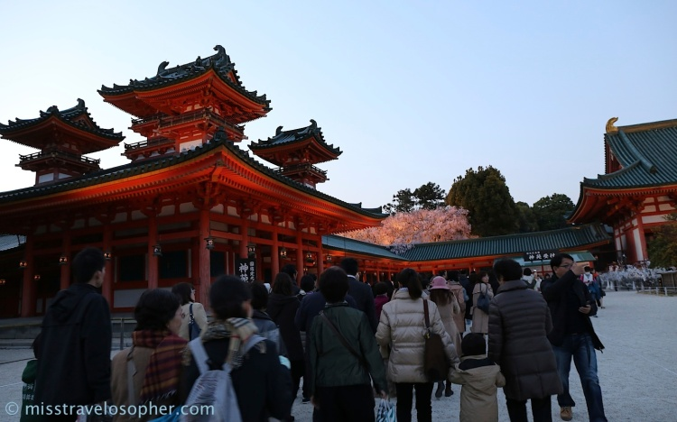 Another long queue to get into the weeping sakura garden! Caught a glimpse of the pink sakura peeping through the roof