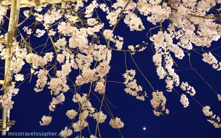 Sakura flowers against the night sky