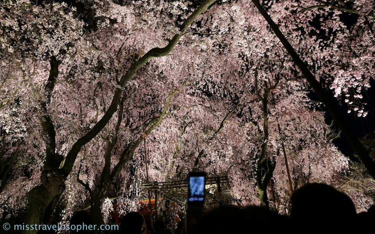 Tall trees with a thick canopy of flowers which blocked out the night sky…!