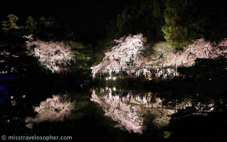 More reflections. The beautiful part about night sakura at Heian is the reflection of the trees in the water